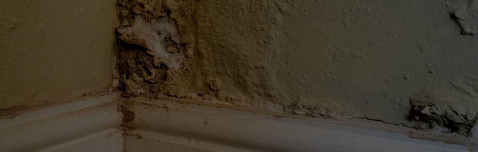Visible Improvements Damp Proofing Randburg Sandton Johannesburg Bg 940 1